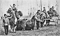 Orenburg cossacks with camels.jpg